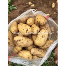 2015 New Potato