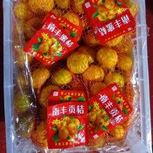 Nova colheita doce fresco Nanfeng bebê mandarim