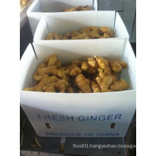 Fresh 250g and up Ginger