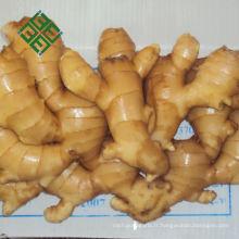 pots de gingembre bleu et blanc gros gingembre frais