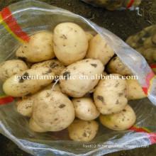 2016 NOUVEAU CROP Pomme de terre fraîche 100g jusqu'à 10kg sac en maille / carton
