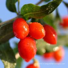 Baies de Goji Frais Ningxia (Wolfberry) - Chun Guo Goji