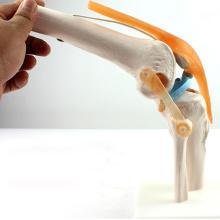 JOINT05 (12351) Anatomie médicale Science Humains Modèles anatomiques de l'articulation du genou squelette