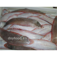 Fresh Tongue Sole Fish