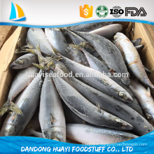 Poissons de mer meilleurs fruits de mer avec des poissons de maquereau fraîchement congelés / maquereau pacifique