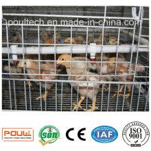 Куриные клетки / Куриный комбинезон