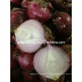 New Red Onion
