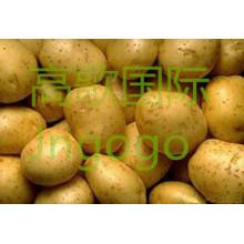 Patata frita china buena calidad buena