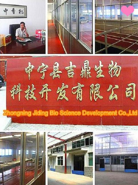 Ningxia Goji Berry process factory