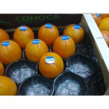 Vide jetable bon marché formant l'emballage alvéolaire de plateau de fruit d'utilisation de persimmon pour la protection