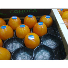 Cheap Disposable Vacuum Forming Alveolar Persimmon Use Fruit Tray Packaging for Protection