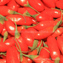 Native Organic Goji Berry Manufacturer