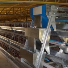 유형 닭 농업 장비