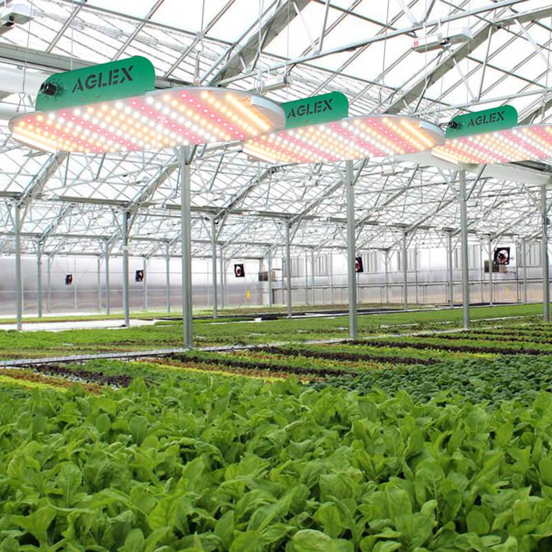 veg led grow light big results