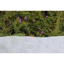 PP Spunbond Planting Bags Agriculture Nonwoven Fabric Whole
