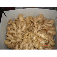 2014 New Crop China Fresh Ginger Hot Sale