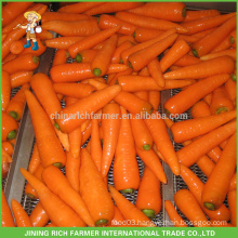 Quotation for Fresh Carrot
