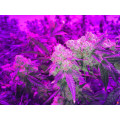 LED Grow Light for Indoor Medical Plant Flowers