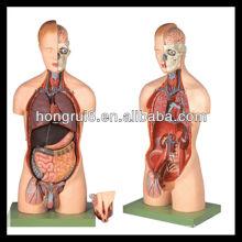 Modelo de torso de sexo dual Deluxe ISO com órgãos internos