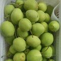 Nouvelle Récolte Fraîche Green Shandong Poire