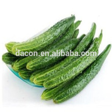dehydrated cucumber slice