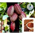 Сексуальное повышение марки порошка какао