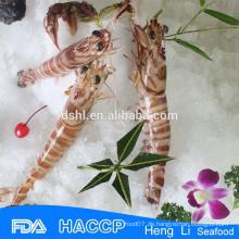 HL002 beste Qualität gefrorene Garnelen