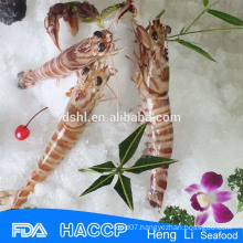 HL002 best quality frozen shrimp