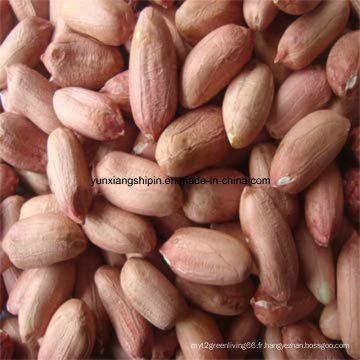Meilleur prix chinois pour le noyau de cacahuète