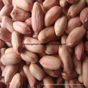 Chinese Best Price for Peanut Kernel