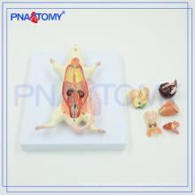 Modelo anatómico animal PNT-0821 Modelo de disección de ratas