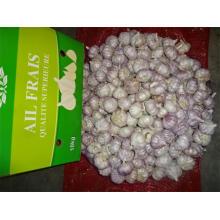 Hot Sale New Crop Garlic