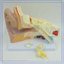 Anatomie médicale professionnelle de la Chine PNT-0670 4 fois modèles géants d'oreille pour l'école