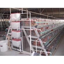 Equipo de granja de aves de corral a marco Jaula de pollo de engorde / jaula de ave / equipo de pollo