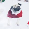 Natal bonito dos desenhos animados cão crianças Cartoon estática adesivos