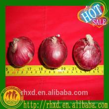 Цена Шаньдун Красный Лук Лук Экспортера В Китае
