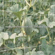 Soportes de plástico para plantas trepadoras