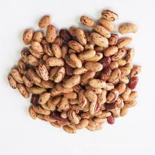 Light Speckled Kideny Beans