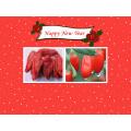 Medlar Goji Berries Chinese Wolfberry Himalayan Goji Berry