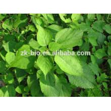 Supply Organic Nettle Root Powder