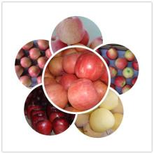 2015 Neuer frischer Apfel