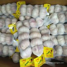 Новый сезон Свежий чеснок с пакетом 200gx50