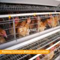 A Type Automatic Chicken Layer Cage for Sale in Philippines