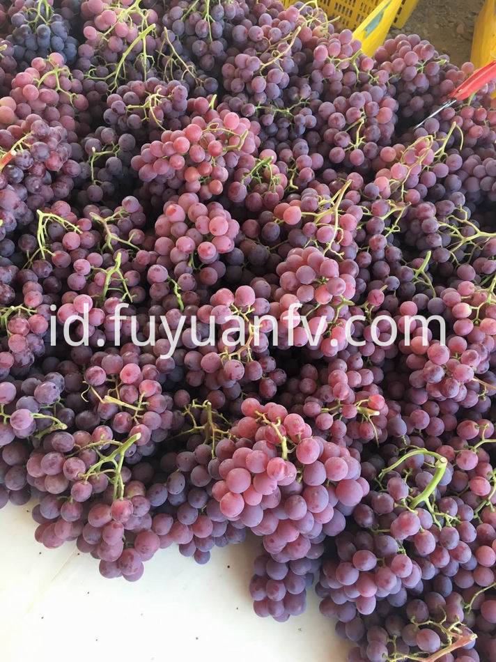red grape-2