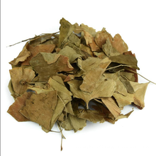 Top Quality Ginkgo Folium