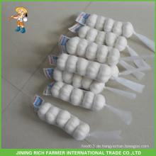 Guter Preis Shandong frischer Schneewittner Knoblauch 5.5CM