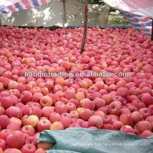 fuji vermelho fresco da maçã