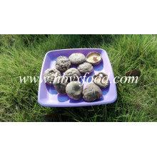 Smooth Shiitake Mushrooms 1kgs Pack com tampa de 4-6cm e sem haste