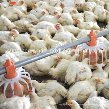 Hot Sale Automatic Poultry Farm Equipment for Broiler Farm