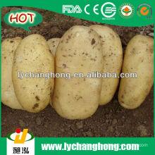 Full Mature Potato 2013